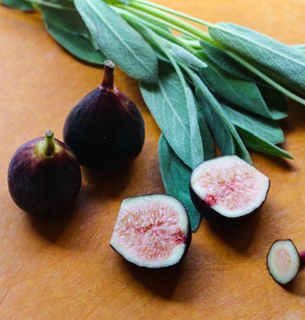 figs_600